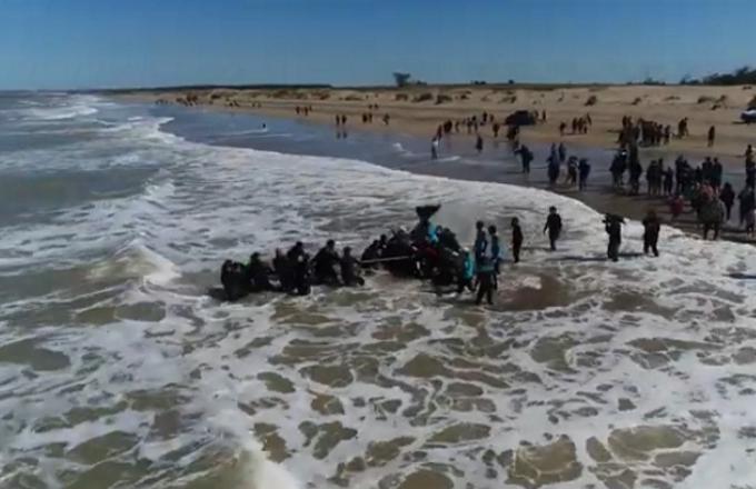 Argentina: il salvataggio di sei orche