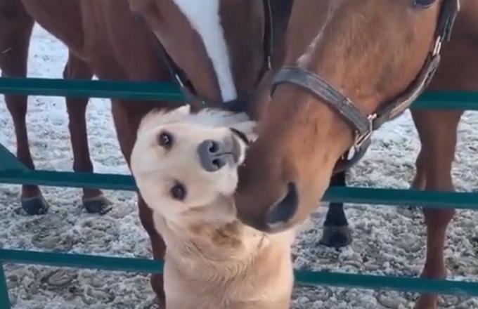 L'amicizia tra cane e cavalli